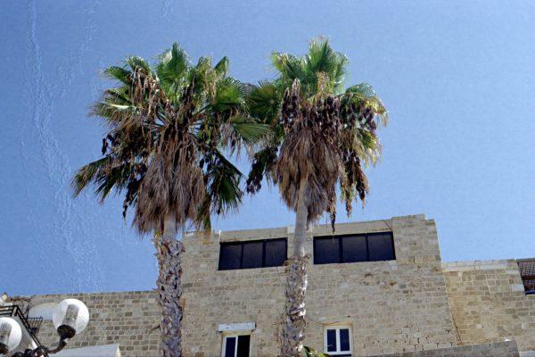 ISRAEL_ANALOGUE_00033